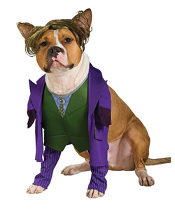 The joker - pet costume